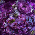 Peonies In Purples by Carol Cavalaris