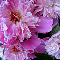 Peonies Under The Weather by Jessica Tolemy