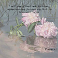 Peonies With Psalm 91.2 by TN Fairey