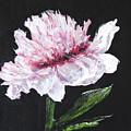 Peony Bloom by Betty-Anne McDonald