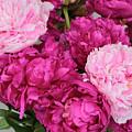 Peony Bouquet by Carol Groenen