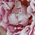 Peony Close Up by Christiane Schulze Art And Photography