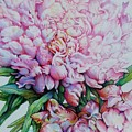 Peony Pink Parfait  by Catherine Robertson