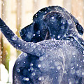 Pepper And The Snow Storm by PatriZio M Busnel