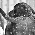 Pepper At Snow by PatriZio M Busnel