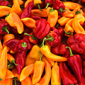 Peppers by Frank Wilson
