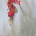 Pequot The Rooster by Donlyn Arbuthnot