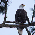 Perched And Proud  by Jeff Swan
