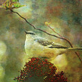 Perched On Sumac Impression 0209 Idp_2 by Steven Ward