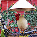 Perched Rooster by Claude LeTien