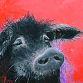 Percival The Black Pig by Jan Matson