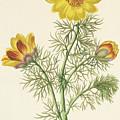 Perennial Adonis by Pierre Puvis de Chavannes