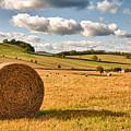 Perfect Harvest Landscape by Amanda Elwell