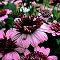 Perfect Pink by JB Thomas