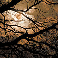 Perigee Moon In The Trees by Tamyra Ayles