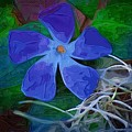 Periwinkle Blue by Donna Bentley