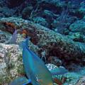 Perky Parrotfish by Kimberly Mohlenhoff