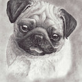 Perky Pug by Laurie McGinley