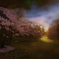 Perplexing Illumination by Jeff Burgess