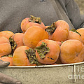 Persimmons In A Bucket by Inga Spence