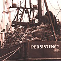 Persistence by Tammy Hankins