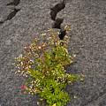 Persistent Flora by Robert Ponzoni