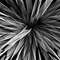 Perspective Facets by Kris Haney Sirk Designs Ltd