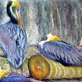 Peruvian Pelicans Three Pastel by Antonia Citrino