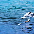 Pescando Vida by Jose Miguel Angeles