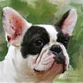Pet Bulldog Portrait by Michael Greenaway
