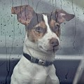 Pet Looking Out Car Window On Rainy Day by Jeramey Lende