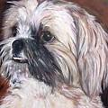 Pet Portrait Artist Painter by Renee Dumont  Museum Quality Oil Paintings  Dumont