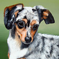 Pet Portrait Painting Commission Any Animal by Sharon  Lamb