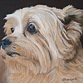 Pet Portrait Painting Commission Cairn Terrier by Sharon  Lamb