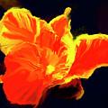 Petal Flare by Brian Tones