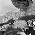 Petal Perch by Mithayil Lee