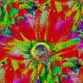 Petal Power by Tim Allen