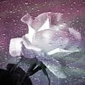 Petals And Drops by Julie Palencia
