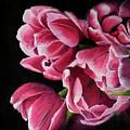 Petals by Fiona Valentine