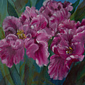 Parrot Tulips by Jacqueline Whitcomb
