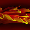 Petals Like Fingertips By Kaye Menner by Kaye Menner