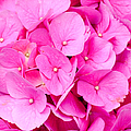 Petals by Lisa Richards