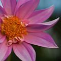 Petals by Mike Reid