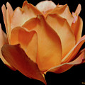 Petals Of Orange Sorbet by DigiArt Diaries by Vicky B Fuller