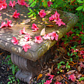 Petals On A Bench by Susanne Van Hulst
