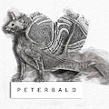 Peterbald Kitten 01 by Maria Astedt