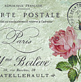Petit Rose Confection by Sarah Vernon