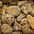 Petoskey Stones Vlll by Michelle Calkins