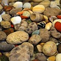 Petoskey Stones With Shells Ll by Michelle Calkins