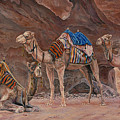 Petra Camels by Edmund Price